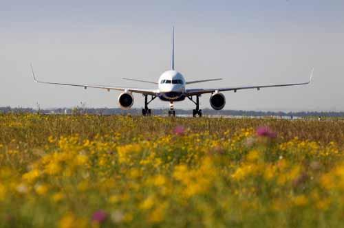 plane green